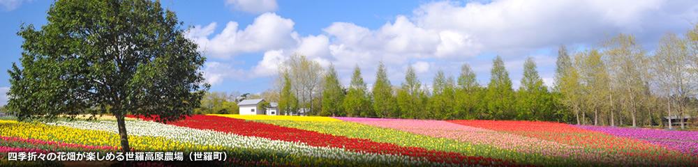 四季折々の花畑が楽しめる世羅高原農場(世羅町)