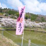 上山の桜並木