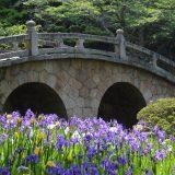 菅原神社のかきつばた